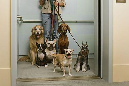 Elevadores x Animais domésticos